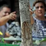 New York: la Madonna di Guadalupe appare su un tronco